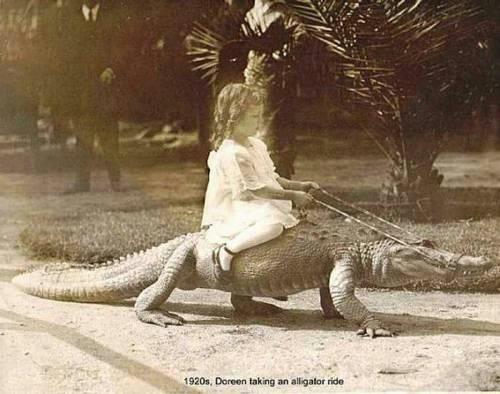 Her Pet Alligator, Chompers